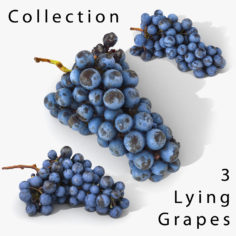 3D Grapes Lying Realistic Collection