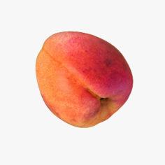 Apricot Realistic 05 3D Model