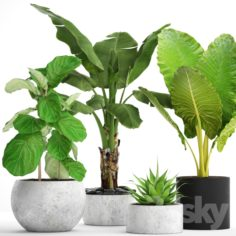 Collection of plants in pots 36                                      3D Model