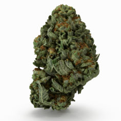 Cannabis Bud 06 3D Model