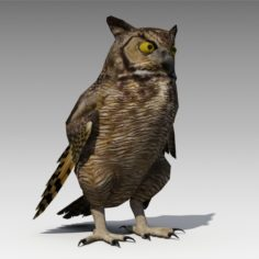 Owl Animated 3D model 3D Model