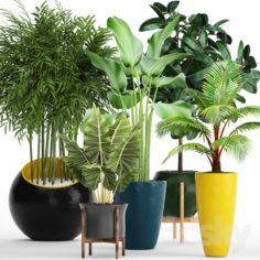 A collection of plants in pots. 63                                      3D Model