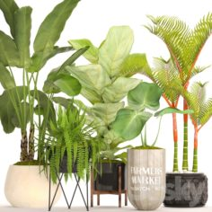 A collection of plants in pots. 48                                      3D Model