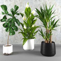 Contemporary house plant set 3D Model