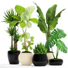 Collection plants 3D Model