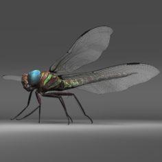 3D Dragon Fly model 3D Model