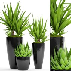Potted plants Yucca and Agava 3D Model