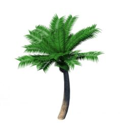 Plant – Coconut Tree 32 3D Model