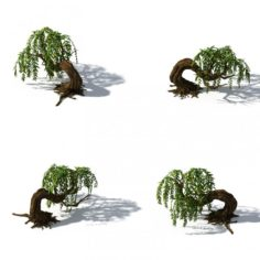 Peach Blossom Island – Plant – Willow 01 3D Model