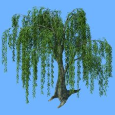 Forest Trees – Willow 03 3D Model