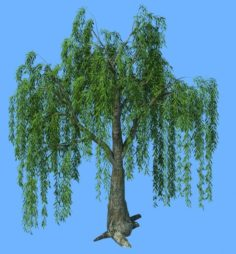 Forest Trees – Willow 01 3D Model