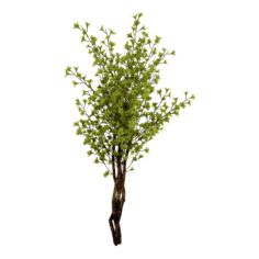Forest plants – Small trees 032 3D Model