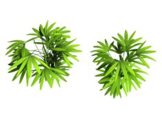 Mount Cliff – Small Plant 04 3D Model