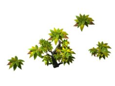 Small shrub 61 3D Model