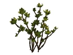 Mount Cliff – Small Plant 01 3D Model