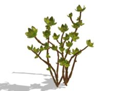 Mount Cliff – Small Plant 02 3D Model