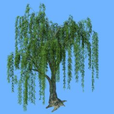 Forest Trees – Willow 02 3D Model