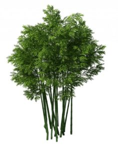 Plant – Bamboo 033 3D Model