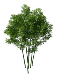 Plant – Bamboo 034 3D Model