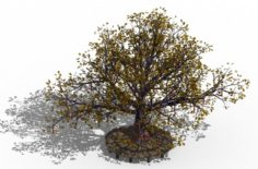Prayer tree 01 3D Model