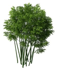 Plant – Bamboo 032 3D Model