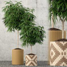 Plants collection 60 3D Model