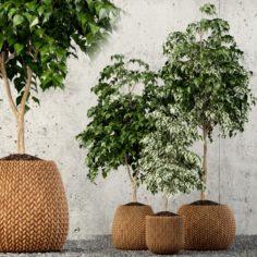 Plants collection 62 3D Model
