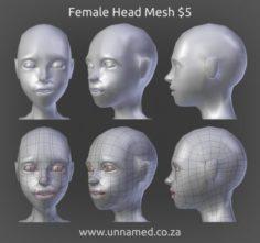 Female Head Model 3D Model