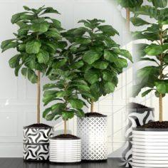 Plants collection 63 3D Model