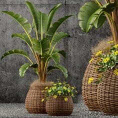 Plant 54 Plants collection 55 3D Model