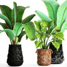 Collection of plants 96.                                      3D Model