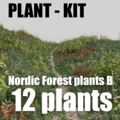 Nordic forest plants B collection 3D Model