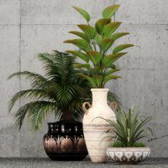 Plants collection 59 3D Model