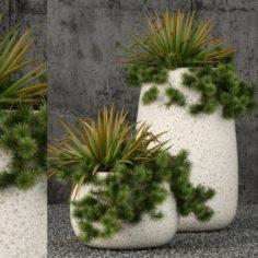 Plants collection 57 3D Model