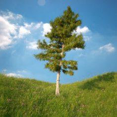 Cedar Tree No 3 3D Model