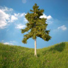Cedar Tree No 5 3D Model