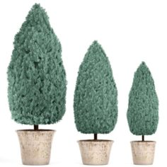 Cupressus and Thuja blue 3D Model
