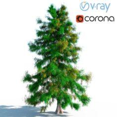 Cedar Tree No 1 3D Model