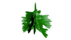 Object tree pine 3D Model