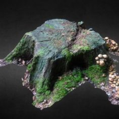 Tree stump Free 3D Model