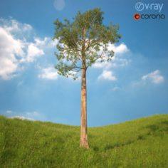 Tree No 5 3D Model