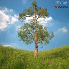 Tree No 2 3D Model