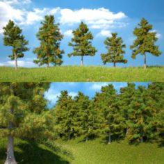 Cedar Tree Collection 5 Models 3D Model