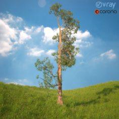 Tree No 4 3D Model