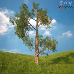 Tree No 3 3D Model