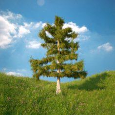 Cedar Tree No 4 3D Model
