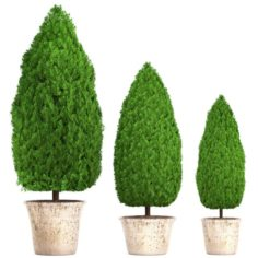 Cupressus and Thuja 3D Model