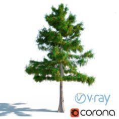 Cedar Tree No 2 3D Model