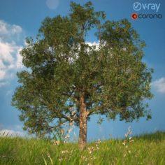 Tree No 1 3D Model