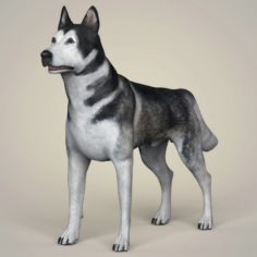 Realistic Alaskan Malamute Dog 3D Model